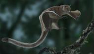 आसमान में उड़ती थी ये गिलहरी, 1.16 करोड़ साल बाद इस शहर में मिले जीवाश्म
