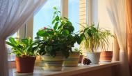 जहरीली हवा से बचने के लिए घर में लगाएं ये पौधे, नेचुरल एयर प्यूरीफायर की तरह करते हैं काम