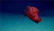ये है दुनिया का सबसे विचित्र जीव, बिना सिर के ऐसे जीता है जीवन, देखें वीडियो