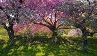 इंसानों की तरह सांस लेते हैं पेड़-पौधे! वीडियो में देखिए अद्भुत नजारा