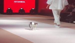 फैशन शो के दौरान जब बिल्ली ने रैंप पर किया असली कैटवॉक! देखें वीडियो