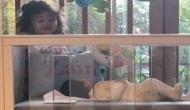 शाहिद कपूर की बेटी और बेटे जैन की ये फोटो हो रही है वायरल, भाई के साथ मस्ती कर रही हैं मीशा