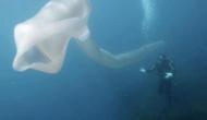 यहां स्कूबा डाइवर्स को समुद्र की गहराई में मिला अनोखा जीव, देखकर हैरान रह गए लोग