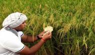 मोदी सरकार के मंत्रालय ने माना, नोटबंदी से तबाह हुए किसान