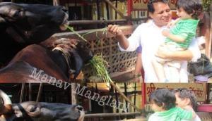 गाय को चारा खिलाते वक्त तैमूर ने की मस्ती, खिलखिलाकर हंसे छोटे नवाब और तस्वीरें हो गई वायरल