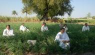 BJP सरकार की किसानों को अजीबो-गरीब सलाह- 'खेतों में मंत्र पढ़ने से उगेगी अच्छी फसल'