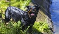 भूख से तड़प रहा था कुत्ता, खाने की खुशबू मिलते ही किया कुछ ऐसा कि मालिक को जाना पड़ा जेल