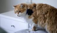 इस बुजुर्ग ने पड़ोसी की बिल्ली के साथ किया ऐसा काम कि चली गई उसकी जान