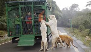 ये हैं दुनिया का सबसे खतरनाक चिड़ियाघर, जहां खुलेआम घूमते हैं जानवर, इंसान रहते हैं पिंजरे में कैद