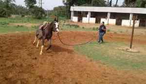 Kripa Nayal Unbridled: Anything for the Horses!