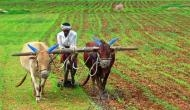 Heavy rains, hailstorm damage crops in northern India