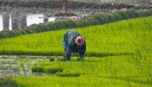 BJP सरकार का बंपर तोहफा, हर किसान को खेती के लिए मिलेगा 25 हजार रुपये