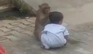 अकेलेपन से परेशान होकर बंदर ने उठाया ये खौफनाक कदम, बच्चे को किया किडनैप और फिर...