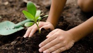 घर के बाहर पौधा लगाने से पहले हो जाएं सतर्क, ध्यान रखें ये जरूरी बात