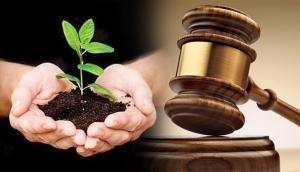 छेड़छाड़ के आरोपी को जमानत के लिए मिली अनोखी सजा, लगाए 50 पेड़ और...
