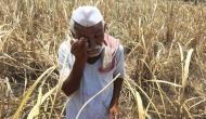 यहां के किसान 6000 रुपये लाभ लेने से रह सकते हैं वंचित, पीएम किसान योजना से मिलना है पैसा