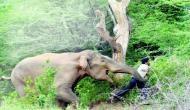 जंंगली हाथी ने गांव में मचाया तांड़व, सात साल के बच्चे सहित तीन लोगों को कुुचला