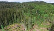 100 साल बाद लाइब्रेली के रूप में बदल जाएगा ये पूरा जंगल, जानिए क्या है इसकी वजह