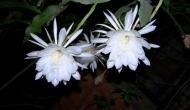 14 वर्ष में सिर्फ एक बार खिलता है ये फूल, जिसने भी देखा वो हो गया मालामाल