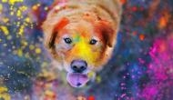 Holi 2019: Keep your pets safe from colours by following these simple steps!