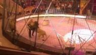 सर्कस में शो के दौरान शेर ने किया ट्रेनर पर हमला, वीडियो में देखिए फिर हुआ क्या