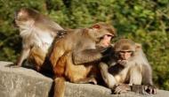 लैब टेक्नीशियन से बंदरों ने छीन लिए कोरोना पॉजिटिव मरीजों के ब्लड सैंपल, अब क्या होगा ?