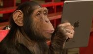 Chimpanzees may adapt to human developed habitats better than natural one: Researchers