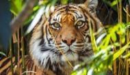 World Tiger Day: बाघों के लिए भारत दुनिया की सबसे सुरक्षित जगह, जनसंख्या में 30 फीसदी की बढ़ोतरी