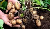 गुजरात के आलू किसानों की बड़ी जीत, पेप्सिको ने वापस लिए सभी केस