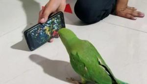 मोबाइल के लिए दीवाना है ये तोता, बिना फोन के नहीं खाता खाना