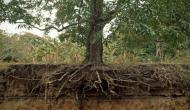 Vastu tips: पेड़ को काटते वक्त जरूर ध्यान दें ये बातें, घर में धन की वृद्धि के साथ आएगी खुशहाली