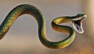 Kerala: Man purchased snake to kill his wife; know what happened next