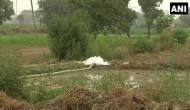 Delhi: Farmers using toxic drain water for growing vegetables in Mungeshpur