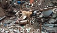 मुंबई में एक सदी पुरानी इमारत गिरी, 14 लोग की मौत, रेस्क्यू ऑपरेशन जारी