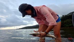 Video: मछली पकड़ने के लिए लगाया था जाल, लेकिन शार्क ने आकर किया कुछ ऐसा कि...