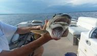 मछली पकड़ने गई थी महिला, जाल में फंस गई ऐसी चीज देखने वालों की निकल गई चीख