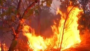 दो सप्ताह से जल रहा 'दुनिया का फेफड़ा', आठ महीने से 73,000 बार लगी आग
