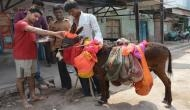 यहां मनाया जाता है अनोखा त्योहार, धूमधाम से की जाती है गधों की पूजा
