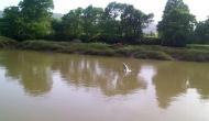 Maharashtra: 4 rivers cross danger mark in Raigad
