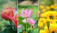 फूलों में छिपा है इन बीमारियों का इलाज, घर बैठे कर सकते हैं इनका इस्तेमाल