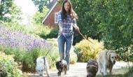 इस देश में पालतू कुत्ते को रोजाना ना घुमाने पर लगता है भारी भरकम जुर्माना, जानिए क्या है वजह