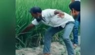 Video: सांप पकड़ने की कोशिश कर रहा था आदमी, निकला कुछ ऐसा लोगों ने दातों तले दबा ली उंगली