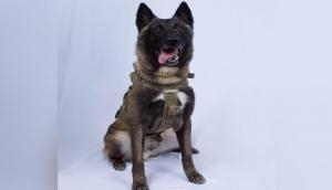Donald Trump releases photo of military dog injured in al-Baghdadi raid