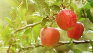 रोजाना सेब खाने से होते हैं ये अद्भुत फायदे, मोटापे के साथ ये खतरनाक बीमारियां हो जाती हैं समाप्त