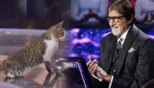 KBC 11 में अमिताभ बच्चन के साथ गेम खेलने पहुंची बिल्ली, सोशल मीडिया पर वायरल हुई तस्वीर
