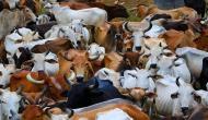 ठंड में नहीं ठिठुरेंगी अयोध्या की गायें, योगी सरकार पहनाएगी गायों को कोट!