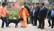 उप्र के मुख्यमंत्री का पालतू कुत्ता 'कालू' बना इंटरनेट सेलिब्रिटी
