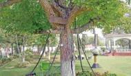 121 सालों से जंजीरों में कैद है ये पेड़, नशे में धुत अंग्रेजी अफसर ने करवाया था गिरफ्तार