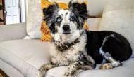 कुत्ते को खोजने के लिए महिला ने प्लेन को लिया किराए पर, दे रही है $7,000 का इनाम
