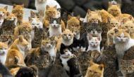 इस आइलैंड पर रहती हैं दुनिया की सबसे ज्यादा बिल्लियां, इंसानों से 6 गुना अधिक है संख्या